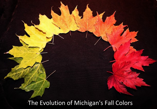 The Evolution of Michigan's Fall Colors
